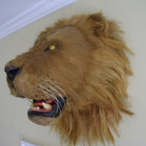 Lions Head Taxidermy Hand Made Film Prop Antique Collectibles