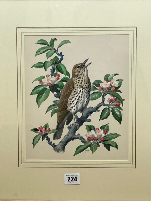 """Watercolour """"Chirping Song Thrush Bird"""" By Charles Frederick Tunnicliffe OBE RA art Antique Art 4"""