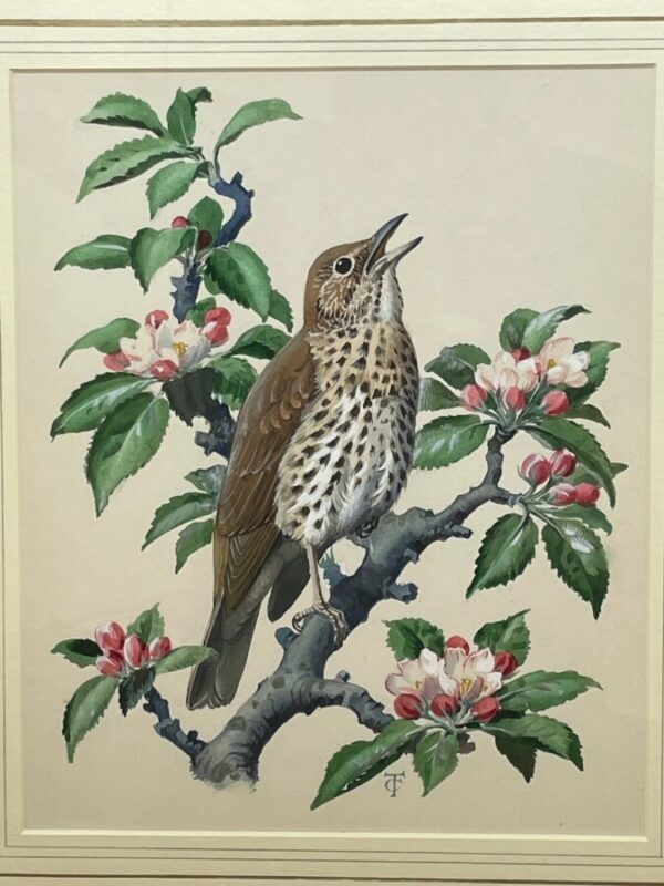 """Watercolour """"Chirping Song Thrush Bird"""" By Charles Frederick Tunnicliffe OBE RA art Antique Art 5"""