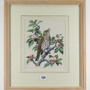 """Watercolour """"Chirping Song Thrush Bird"""" By Charles Frederick Tunnicliffe OBE RA art Antique Art"""