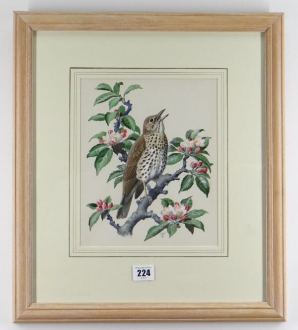 """Watercolour """"Chirping Song Thrush Bird"""" By Charles Frederick Tunnicliffe OBE RA art Antique Art 2"""